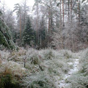 Przyroda zimą